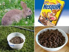 """Just what kind of """"cereal"""" the Nesquik rabbit is eating."""