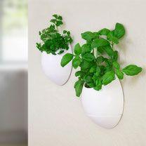 De ThumbsUP! bloempot zorgt er voor dat je eenvoudig binnen aan de muur kruiden kan kweken, zonder dat je veel tijd kwijt bent aan water geven. Verticale tuin, groene muur, eetbare wand, plantentoren.