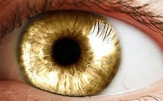 yellow human eyes - Google zoeken
