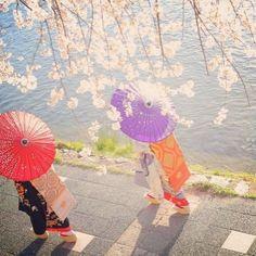 #舞妓 #芸妓 #芸者 #着物 #京都 #和服 #撮影 #四季 #maiko #geisha #geiko #kyoto #kimono #japan #japanease #cute #dress #마이코 #게이샤 #기모노 #일본 #교토 #촬영 #체험 #여행스타그램 #추억 #sakura #벚꽃 #桜