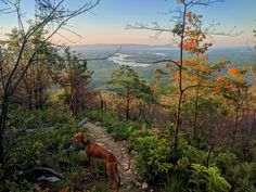 Four legged autonomous hammock heater guides back down Shortoff mountain trail after a cozy night on the rim of the Linville Gorge. Linville Gorge, Mountain Trails, Landscape Photographers, Four Legged, Planet Earth, Hammock, Places To Travel, The Incredibles, Night
