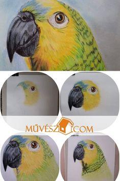 Rajz tutorials - Rajzok lépésről-lépésre - Kattints a linkre és olvasd el a teljes cikket! Parrot, Owl, Rain, Bird, Drawings, Painting, Animals, Parrot Bird, Rain Fall