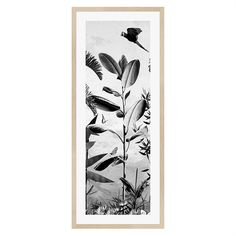 Create a striking statement piece on a feature wall of your home with the Jungle Noir Parrot print. Perfect as a set of three, they will add some jungle vibes to your space. Jungle Noir Parrot Framed Print Size W x D x H Freedom Framed Art, Framed Prints, Wall Art, Jungle Vibes, Cockatoo, All Wall, Contemporary Furniture, Canvas Frame, Parrot