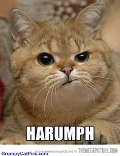 Funny Kitty Cat | Very Cute Kitty Cat Makes An Angry Face Funny Picture - Funny Cats ...