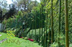 Jardín con Ranka follaje sintético.