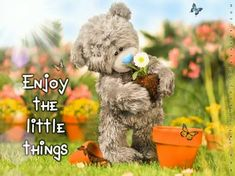 Tatty Teddy, Teddy Bear, Blue Nose Friends, Animals, Quotes, Animais, Qoutes, Animales, Dating
