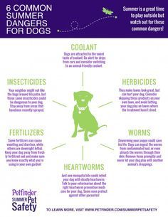 Be aware of these 6 common summer dangers for dogs. Share to keep dogs safe!