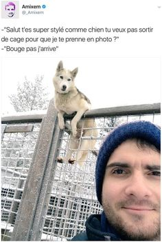"""I don't know what this says but the picture tells it all it says """"Hey your are super cool dog you don't want get outside than i can take you in photo?"""" your welcome in advance 😁 Funny Animal Photos, Funny Animals, Cute Animals, Animals Photos, Funny True Quotes, Funny Tweets, Funny Comics, Funny Moments, Pokemon"""