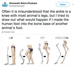 Comparative anatomy gone mad I am not particularly good at art. Pose Reference, Drawing Reference, Cassandra Calin, All Meme, Funny Memes, Jokes, Art Tips, Drawing Tips, Art Tutorials