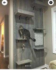 Diy Cat Tree, Cat Wall, Fur Babies, Tiny House, Dog Cat, Cat Stuff, Pets, Animals, Inspiration