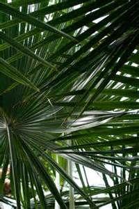 Perfect de hortus botanicus amsterdam logo Ecosia