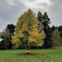 Autumn at the Eketahuna Camping Ground. .