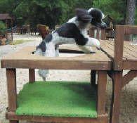 doggie playground dogs playground dog toys dog outdoor playground