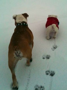❤ First snow together --- And such wee little puppy prints in the snow ! Cruize & Chloe ❤