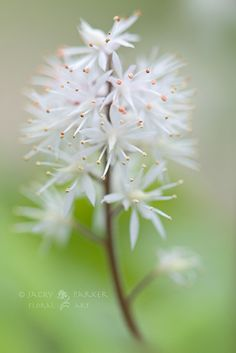 ✤ Simple beautiful White flower Little Foam Flower by Jacky Parker Floral Art, via Flickr