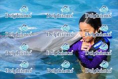 Dolphins pictures, Xcaret Photo, Xel-ha Photos| Photo Delphinus
