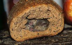 Chleb, Dziura, Małe, Myszki