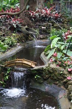 Sunken Gardens, St. Petersburg, Florida with all the gorgeous flowers and exotic birds