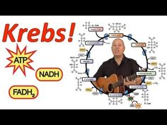 ▶ Krebs! (Mr. W's Krebs Cycle Song) - YouTube