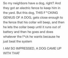 So My Neighbors Have A Dog, Right?