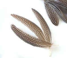 10 Natural guinea fowl feather quills 5-7 inch Natural brown
