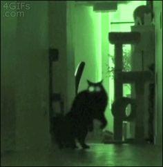 not. creepy. at all. | #cats #catslove #black #creepy #psycho #creepy #gif