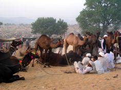 Travel with Asian Voyages to world's largest camel fair Pushkar and enjoy a lifetime experience. For more details please visit http://asianvoyages.co.in/2015/visit-pushkar/