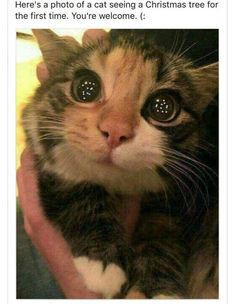 Funny Animal Pictures Of The Day – 30 Pics – Lovely Animals World Lustige Tierbilder des Tages – 30 Bilder – Schöne Tierwelt Cute Funny Animals, Funny Animal Pictures, Cute Baby Animals, Animals And Pets, Funniest Animals, Crazy Animals, Funny Photos, Animals Images, Cute Love Pictures