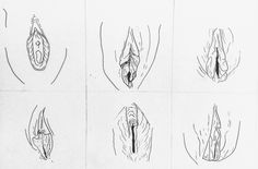 Vulva illustrations