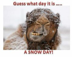 Guess what day it is quotes quote funny quotes days of the week humor wednesday humpday winter quotes wednesday quotes camels Hump Day Quotes, Hump Day Humor, Wednesday Humor, Funny Quotes, Humor Quotes, Funny Winter Quotes, Monday Humor, Clever Quotes, Cold Weather Funny