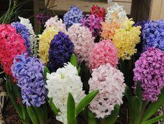 Новыйl Многолетние цветы (33 основных вида): садовый каталог для дачи с фото и названиями