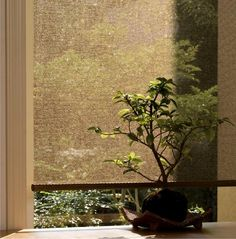 Great Roller Blinds Sheer View