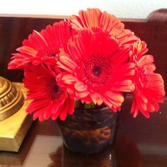 Love these gerberas in the tortoise glass