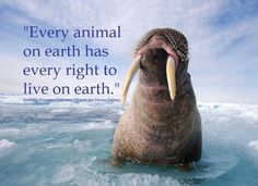 Every animal on earth has every right to live on earth.