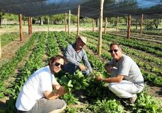 Un proyecto de emprendimiento agroecológico permite obtener 45 toneladas de alimentos de 10 hectáreas que estaban semiabandonadas.