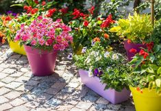 Container Gardening With Colorful Pots And Colorful Flowers : Practical And Popular Container Gardening Colorful Flowers, Beautiful Flowers, Prairie Planting, Pot Jardin, Garden Steps, Bottle Garden, Terrace Garden, Small Terrace, Container Gardening