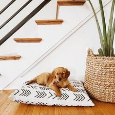 Modern Mud Cloth Natural Dog Bed Cover – Famous Last Words Cute Dog Beds, Diy Dog Bed, Cute Dogs, Puppy Beds, Funny Dogs, Pet Beds, Large Dog Bed Diy, Cute Dog Stuff, Girl Dog Beds