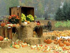 "Flavilicious Fitness ""I am afraid of not living more than I am afraid of living wrong."" -Kaci Diane #fall #pumpkins  Love to Build Muscle? Follow Us! www.flaviliciousfitness.com"