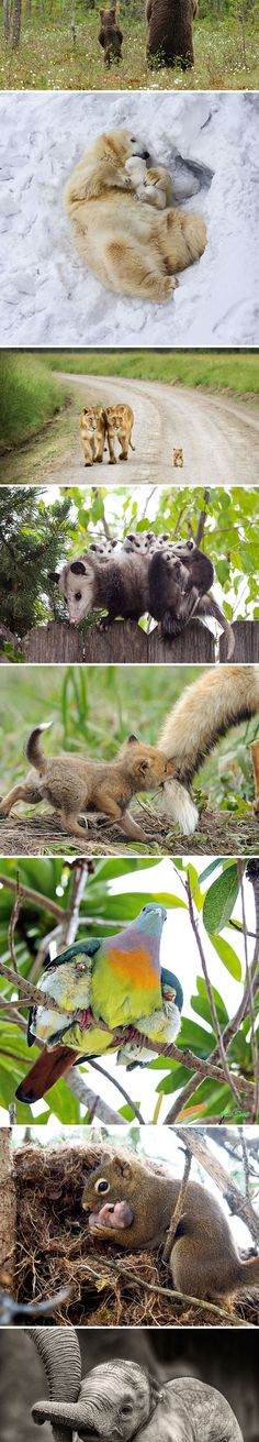 Baby Animals And The Parents