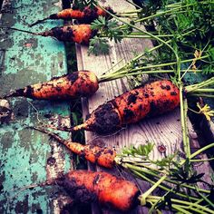 Late October carrots fresh out of the ground.