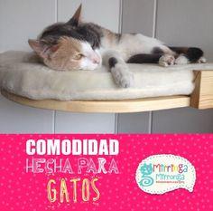 Comodidad para gatos Cats, Animals, Floating Bed, Cat Scratching Post, Pets, Gatos, Animales, Animaux, Animal