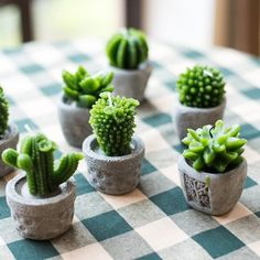 Shop the best succulents on Keep!