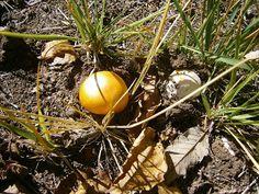 Tanto Piacere ;-) Eggs, Autumn, Breakfast, Image, Food, Morning Coffee, Fall Season, Essen, Egg