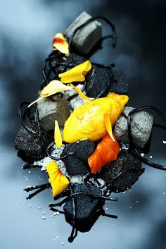 Seaweed dish | jebiga | #food #design