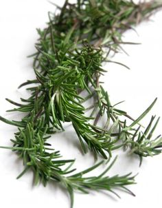 Rosemary is a woody, perennial herb with fragrant,evergreen,needle-like leaves and white, pink,purple or blue flowers,native to the Mediterranean region.It is a member of the mint family Lamiaceae,which includes many other herbs.Rosemary is used as a decorative plant in gardens and has many culinary and medical uses.The leaves are used to flavor various foods, like stuffings and roast meats.