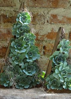 beautiful composition of succulents photo