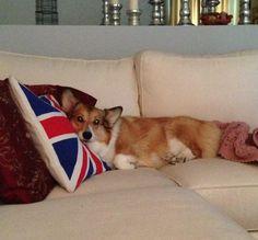Pillow and Princess.