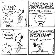 First Appearance: March 4th, 1977 #peanutsspecials #ps #pnts #schulz #charliebrown #snoopy #attorney #feeling #environmental #protection #agency #sue #biting #tree #client #confused #honor #beaver www.peanutsspecials.com