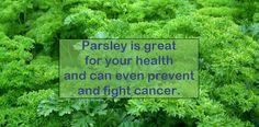 Parsley is a simple yet powerful herb, with many health benefits and even the power to prevent and fight cancer. For Your Health, Health And Wellness, Health Tips, Natural Cancer Cures, Natural Cures, Natural Health, Anti Oxidant Foods, Cancer Fighting Foods, Types Of Cancers