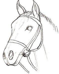 Images for wild horse drawings in pencil art pinterest how to draw a horse head step 5 ccuart Gallery
